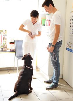 Dr. Obermüller kümmert sich um einen Hund in ihrer Kleintierpraxis