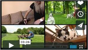 Video über die Entwurmung bei Hund und Katze