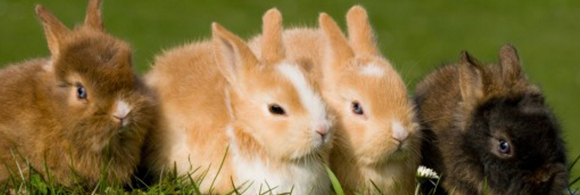 Öffnungszeiten der Tierarztpraxis Obermüller