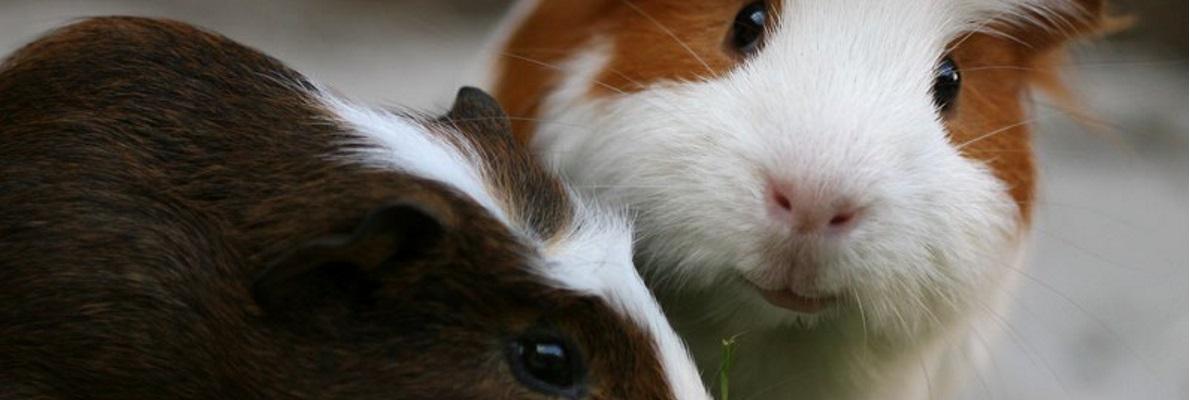 Aktuelles aus der Kleintierpraxis Dr. Obermüller
