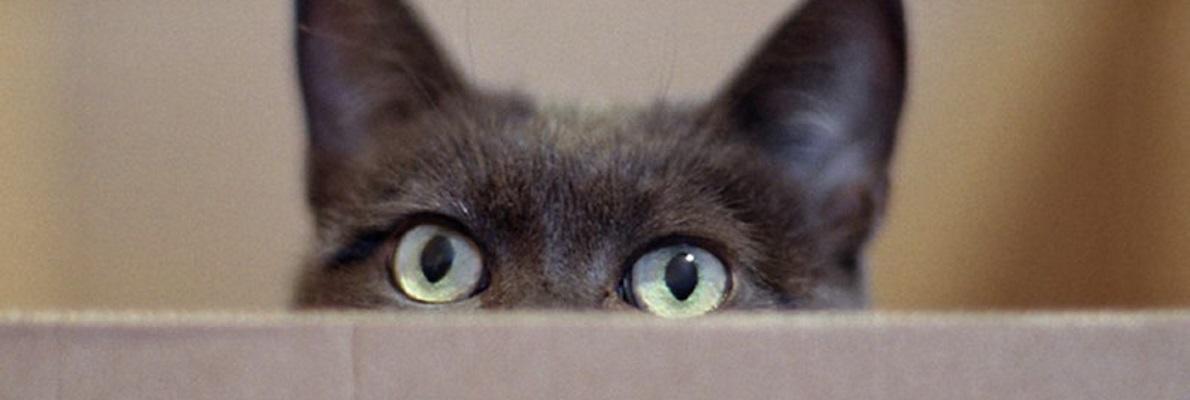 Augenheilkunde in der Kleintierpraxis Obermüller