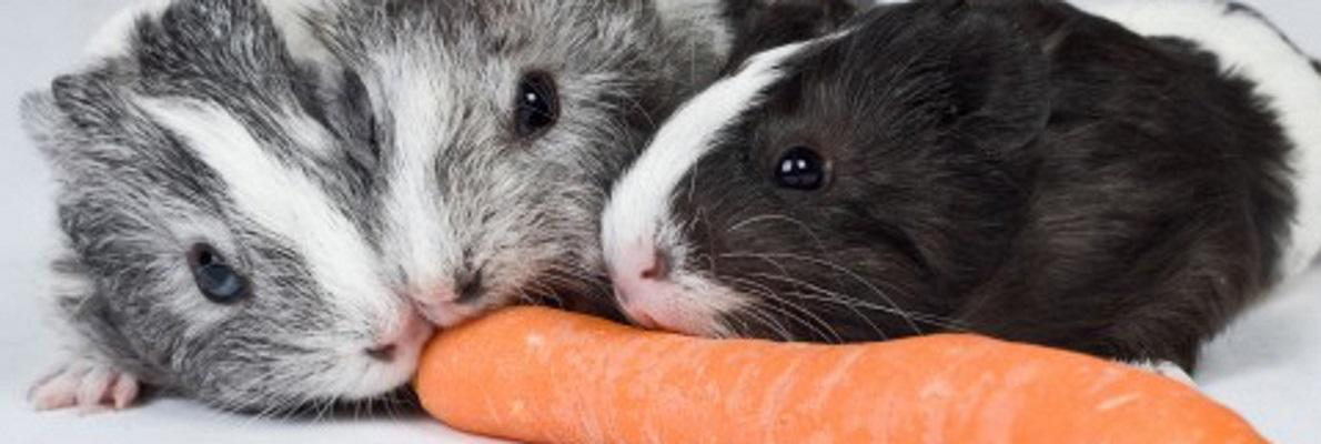 Fulltermittel der Kleintierpraxis Obermüller